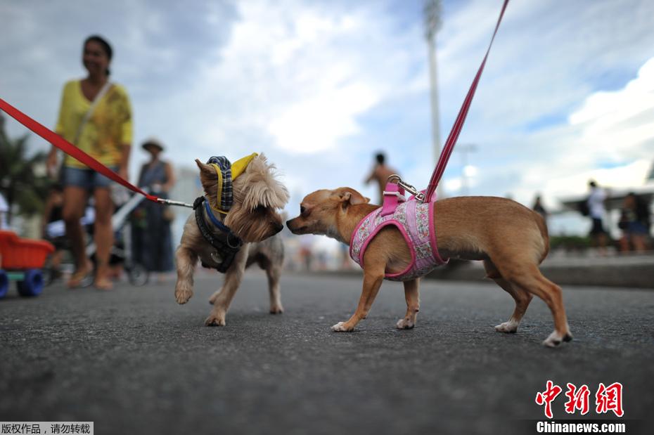 """巴西狂欢节动物大游行 """"小家伙""""们盛装出席"""