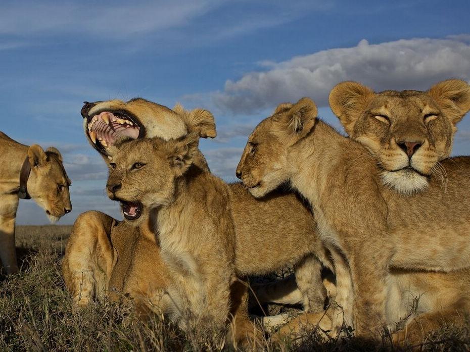 动物世界的感动!国家地理绝美大片——小憩