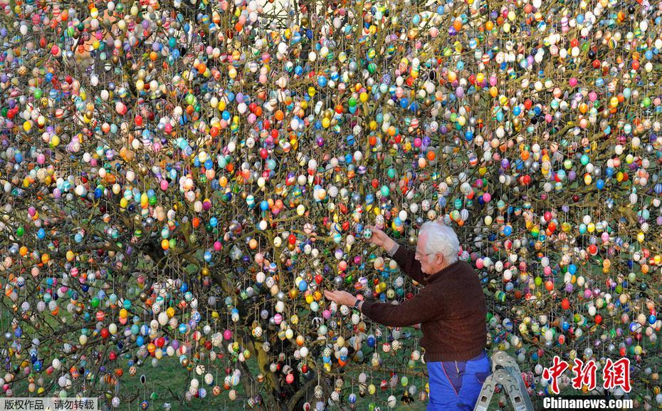 迎接复活节 德国老夫妇果树上挂万颗彩蛋