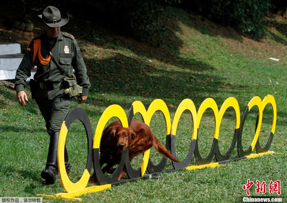 探访哥伦比亚警犬训练营 英勇