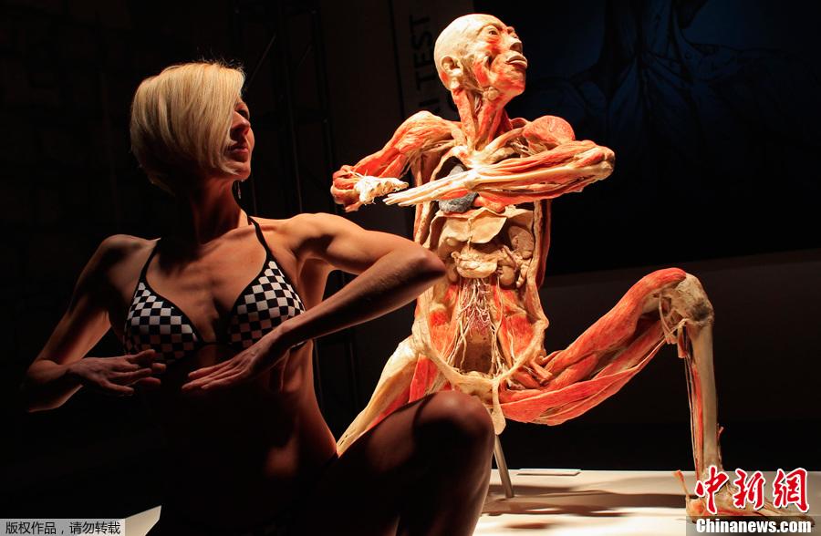 匈牙利布达佩斯举行塑化人体展 中新网