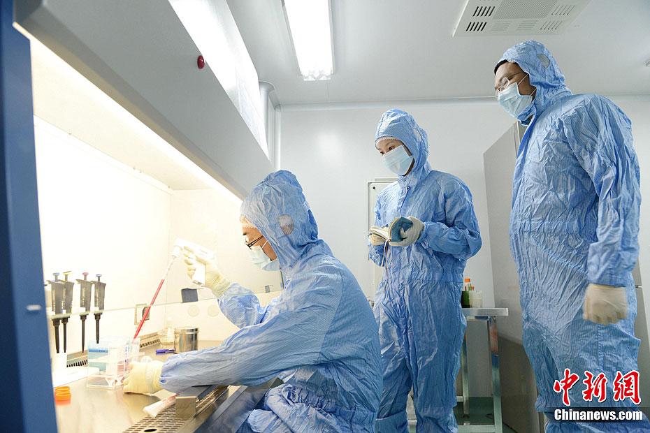 随着电视剧《心术》的热播,让医院再度成为人们关注的热点。25日,记者随医生走进了山西医科大学第二医院进行探访,实拍这些用于为肿瘤患者培养免疫细胞,治疗肿瘤的专用的生物免疫细胞实验室以及医务人员的工作流程。图为医务人员在进行细胞分离。韦亮 摄