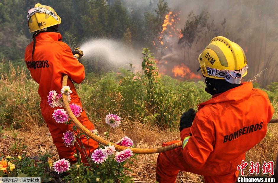 40摄氏度的高温令葡萄牙多地发生森林火灾,已有超过1000名的消防员图片
