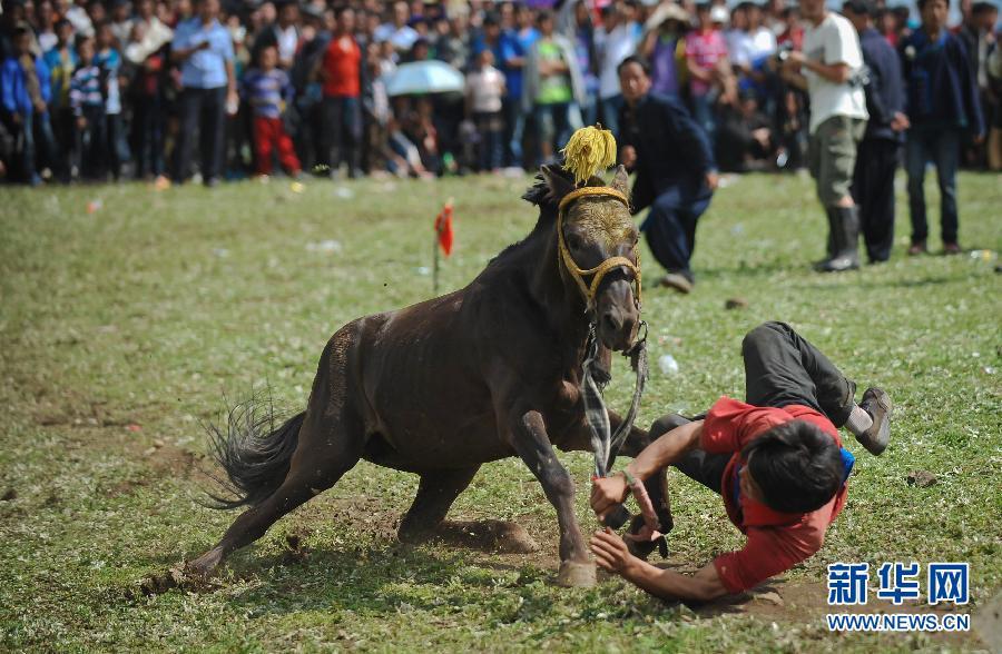 骏马 火把节 四川/7月19日,一名彝族骑手在比赛中不慎从马上坠落。