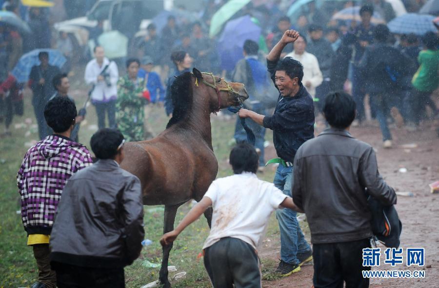 骏马 火把节/7月19日,获得冠军的彝族青年(上中)牵着骏马欢呼。