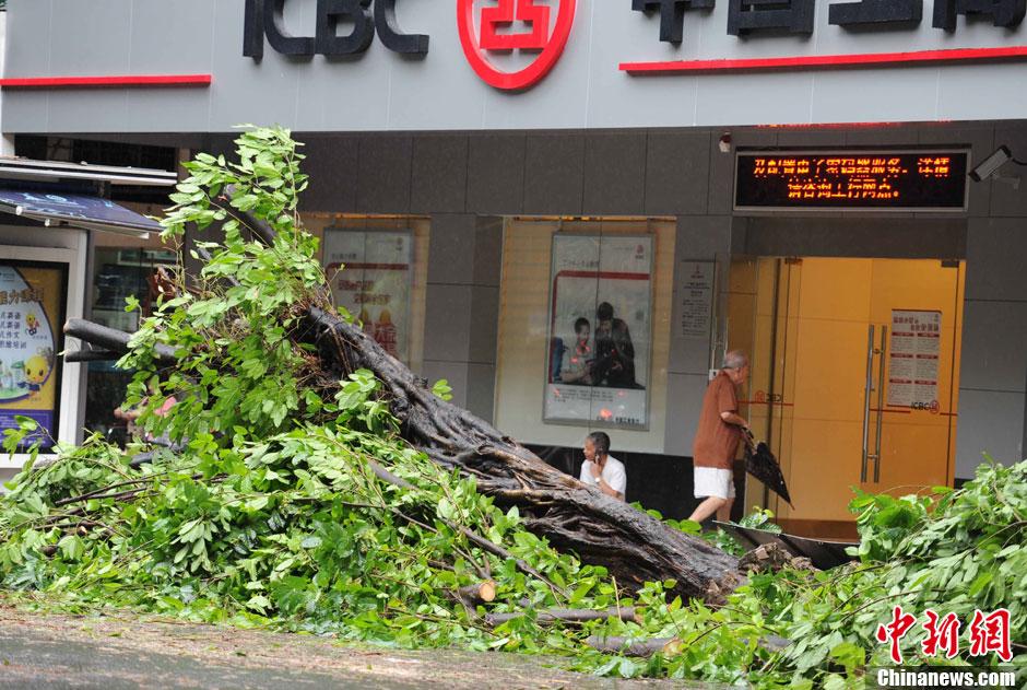 """台风""""韦森特""""影响广州 不少大树被风吹倒"""