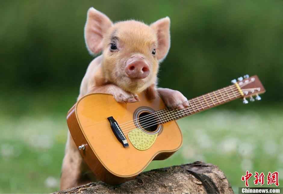 高清动物壁纸小猪
