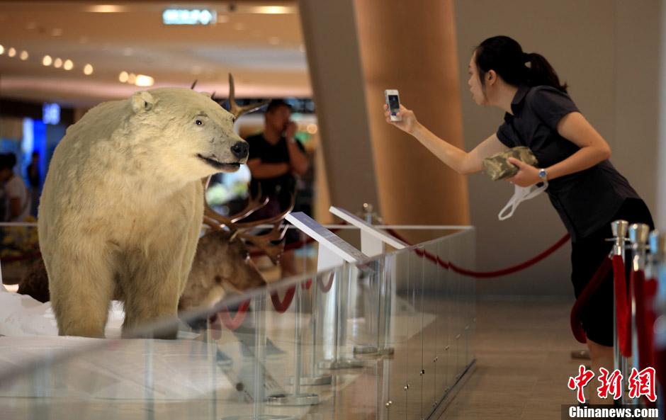 南京举办极地生命探索动物标本展