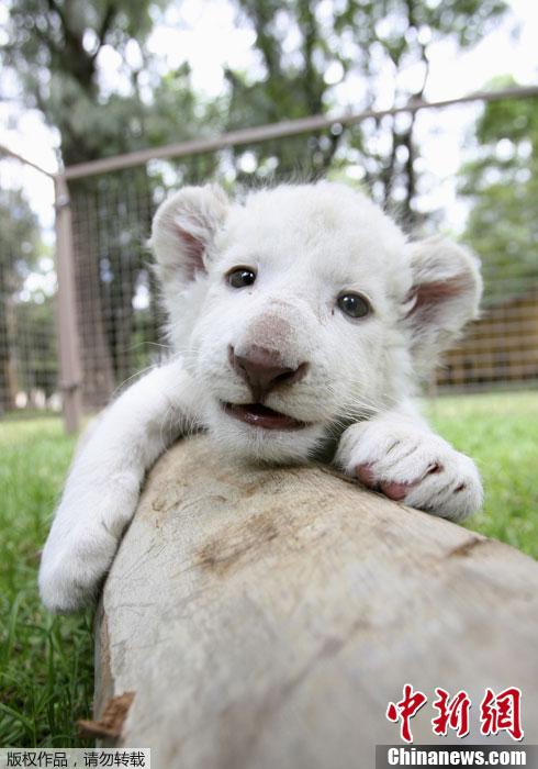 可爱的动物图片全屏
