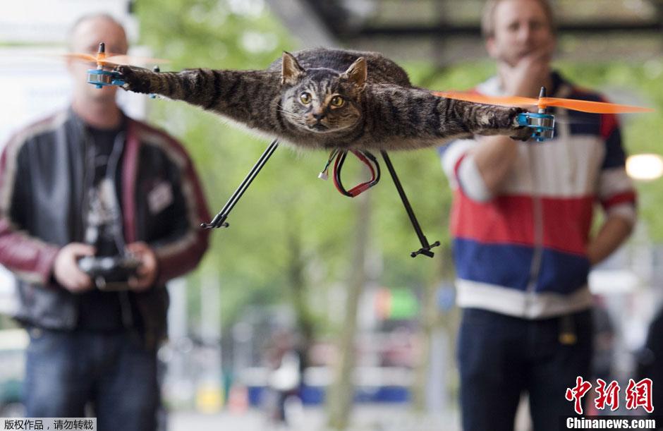 图说2012之最牛的发明——飞猫