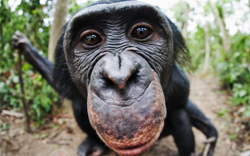 外媒评2012年趣味动物照