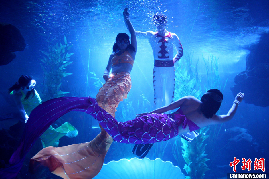青岛海底世界美人鱼表演 如梦似幻演绎浪漫爱