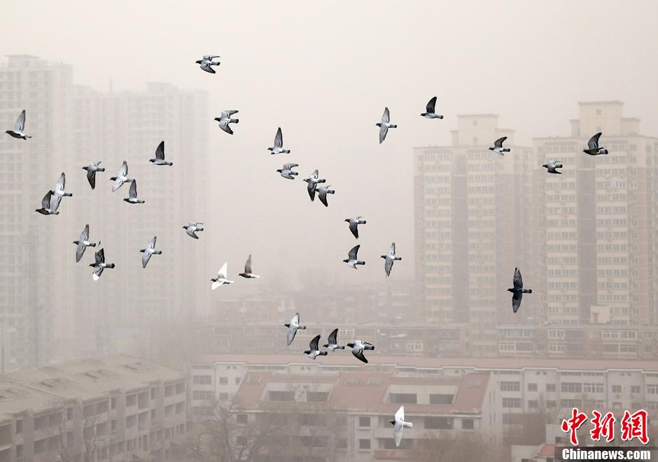 史上最强雾霾侵袭半个中国 中国不能只贡献GDP和雾霾 - 纽约文摘 - 纽约文摘