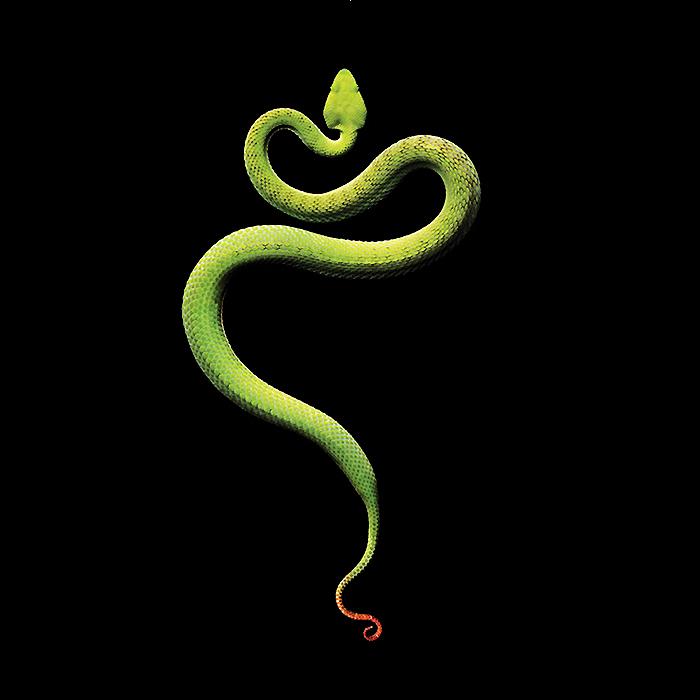 蛇形鹤手猜一生肖