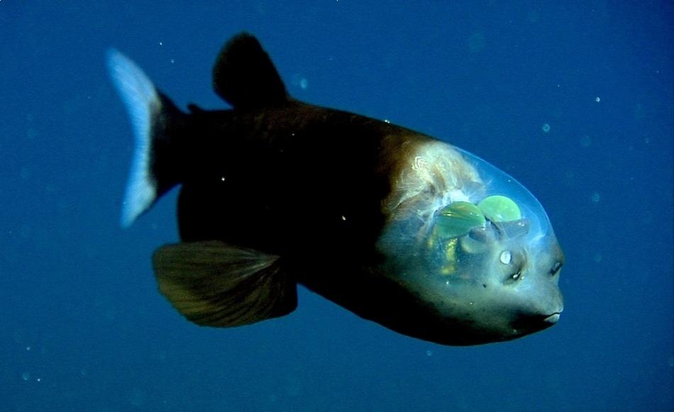 神秘海洋中十大最奇异鱼类