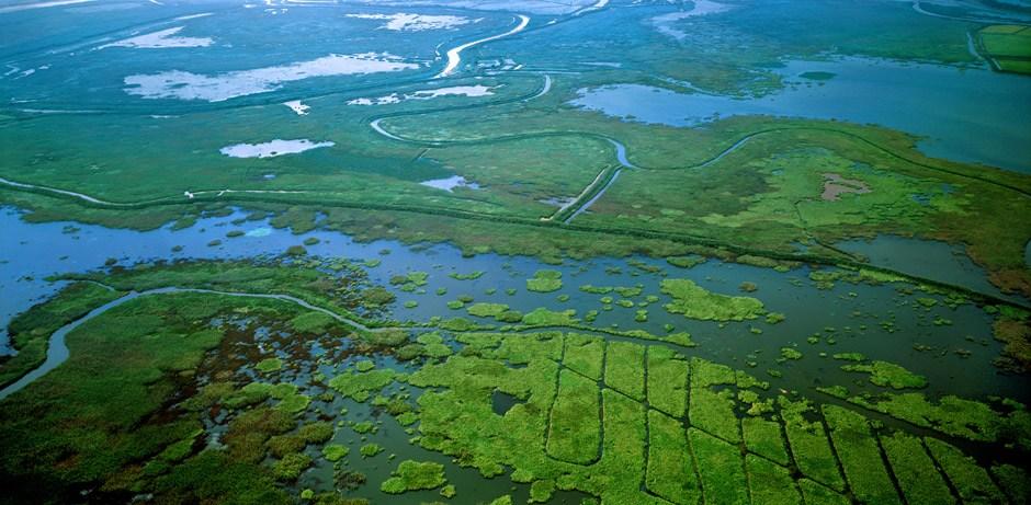 江西湿地公园_江西鄱阳湖国家湿地公园旖旎风光-中新网
