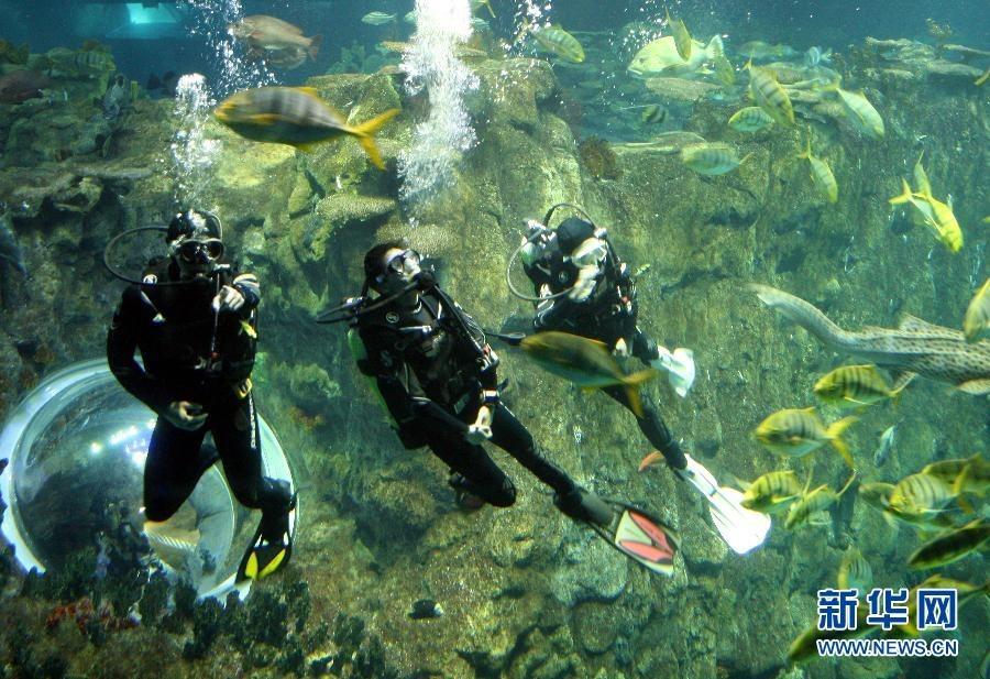 壁纸 海底 海底世界 海洋馆 水族馆 900_617