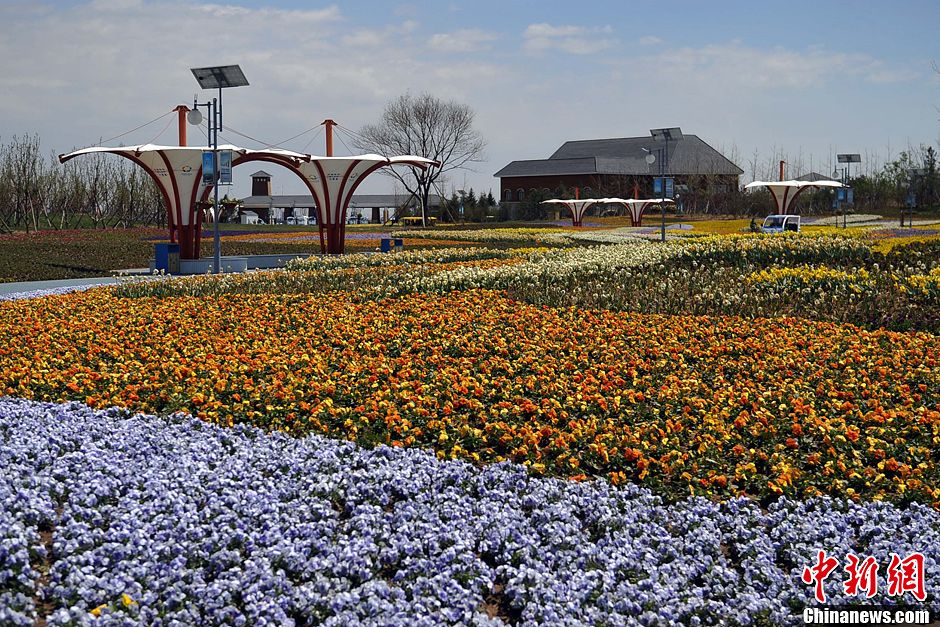 """锦州世界园林博览会开幕 中外游客尽赏""""海上花开"""""""