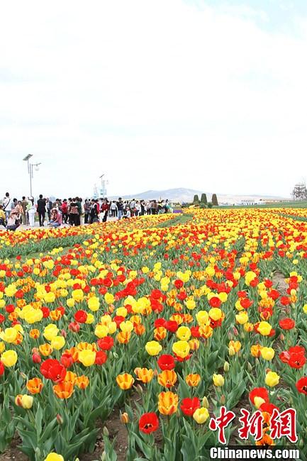 正式对外开放后的锦州世博园,是世界首个建在海上的大型风景园林