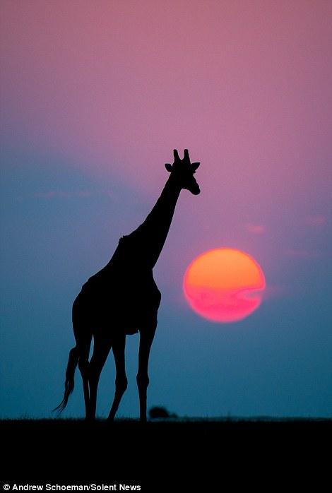摄影师拍摄南非动物剪影优美画面