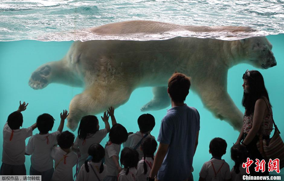 北极熊乔迁新居 新加坡动物园畅游卖萌