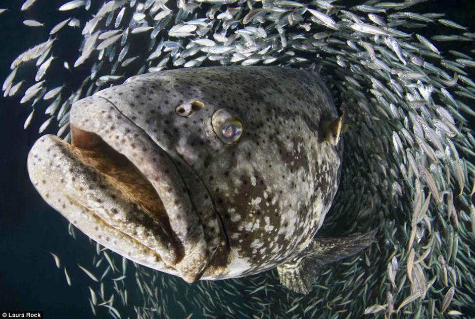 精彩水下摄影作品 呈现绚烂无比的海洋世界-中新网