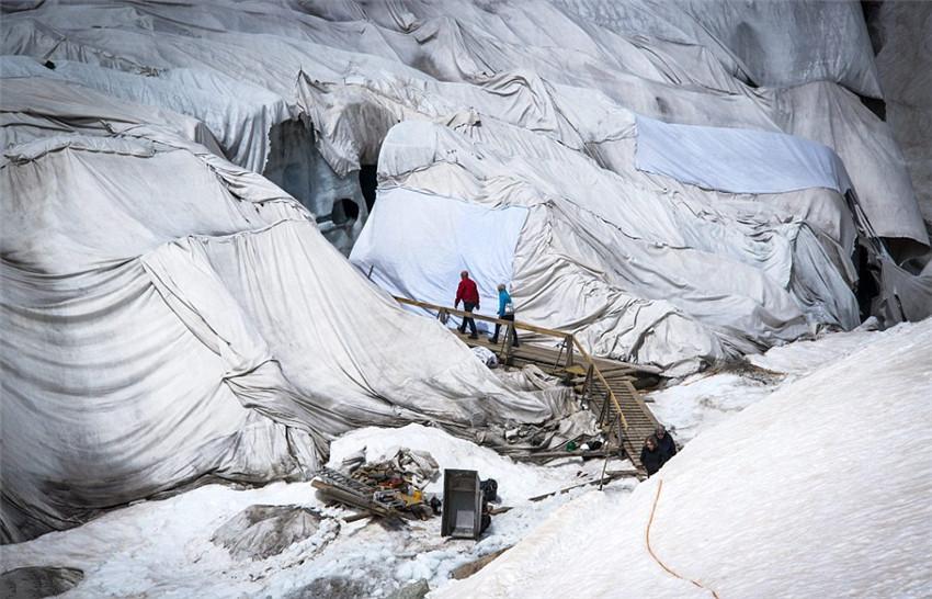 阿尔卑斯最古老冰川盖毛毯防融化