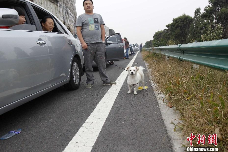 国庆高速免费首日再现大堵车 车主高速路上遛狗