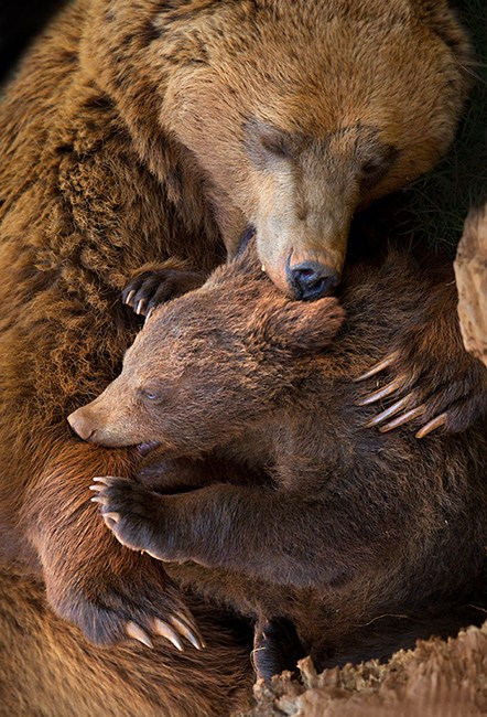 女摄影师拍动物家庭超甜蜜亲子照