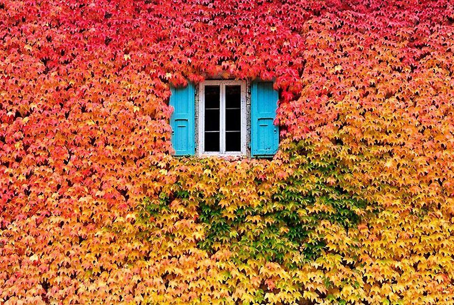 绚丽多彩的落叶秋景图