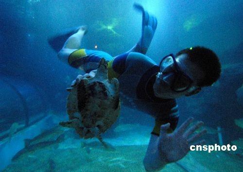 """福建渔民发现国家二级保护动物""""玳瑁""""海龟"""