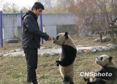 图为陕西省珍稀野生动物抢