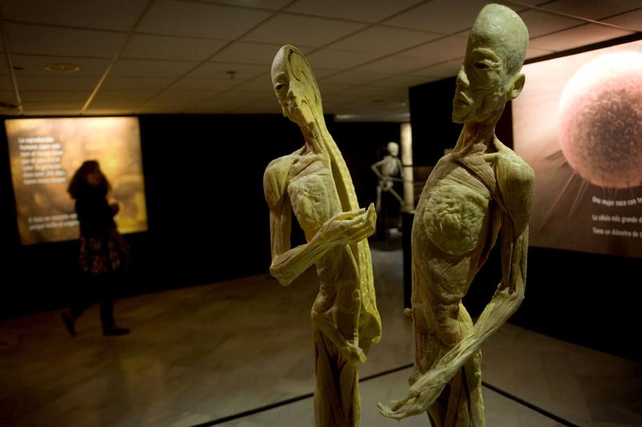 中新网高清图 西班牙举办人体标本艺术展