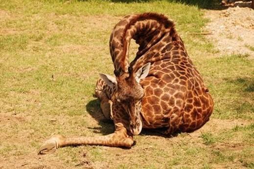 图片频道-趣味组图:动物们的销魂睡姿