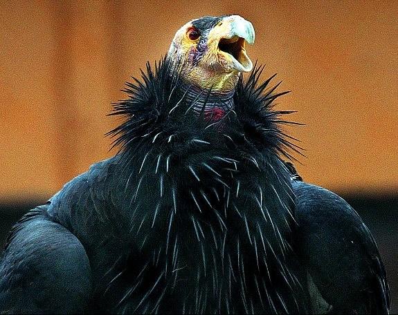 图片频道-世界上最丑陋的动物