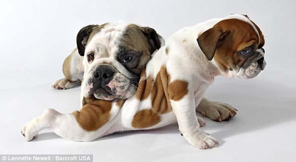 镜的超可爱宠物狗