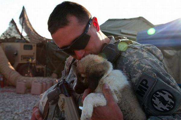 战场上大兵的宠物们