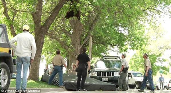 图片频道-黑熊校园闲逛爬树被制伏