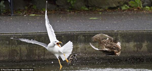壁纸 动物 鸟 鸟类 600_281
