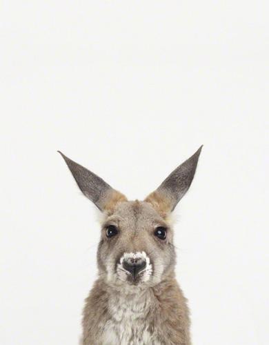 图片频道-动物摄影:宠物宝宝的肖像照