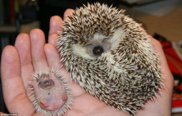 动物界可爱温馨的亲子萌图