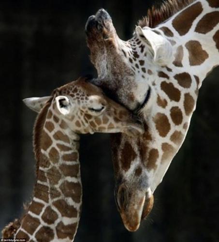 图片频道-动物界可爱温馨的亲子萌图