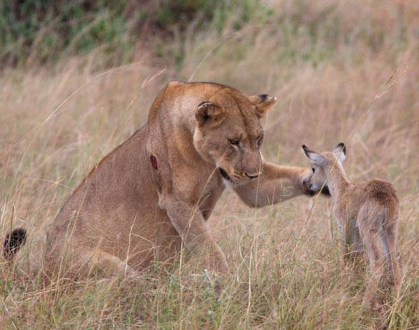 图片频道-野生动物之间令人感动的温馨场面