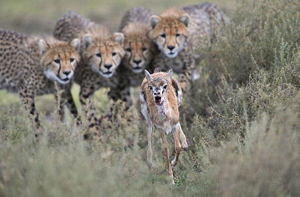 图片频道-威立雅2012年度野生动物摄影师作品精选