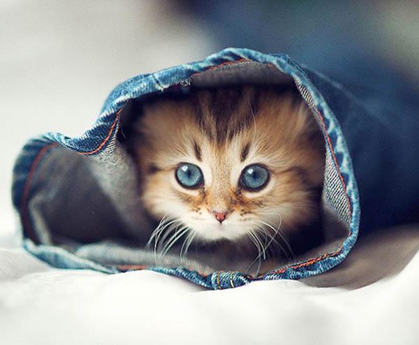 图片频道-澳宠物猫爆红网络被誉最可爱猫咪