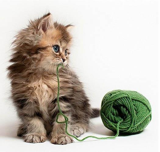 澳宠物猫爆红网络被誉最可爱猫咪