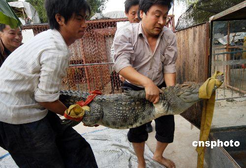 在安徽省亳州市曹氏公园动物