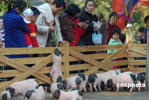 """图:广西南宁公园春节推出""""动物趣味逗乐"""""""