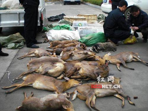 图:湖南截获一偷运野生保护动物货车