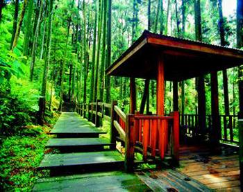 阿里山风景区的杉林,竹林间都有健行步道,图为奋起湖南侧步道.